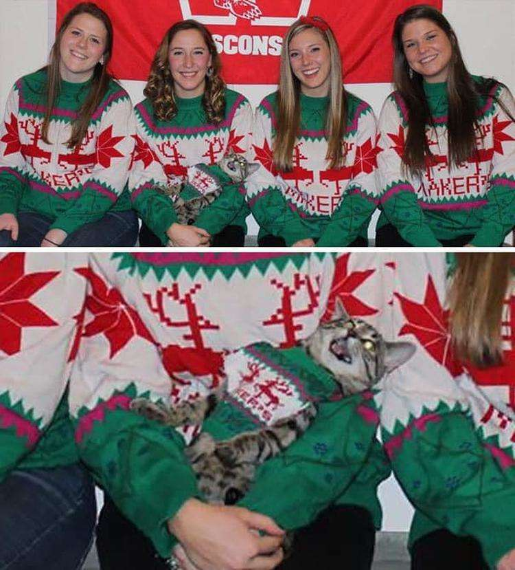Roommates And I Took In A New Housemate Who Is Less Than Thrilled To Be In Our Christmas Card Photo